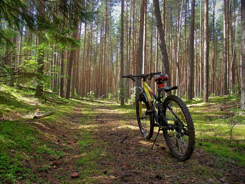 3 червня -  Всесвітній день велосипеда!
